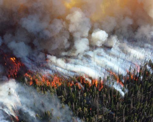 forest, fire, blaze
